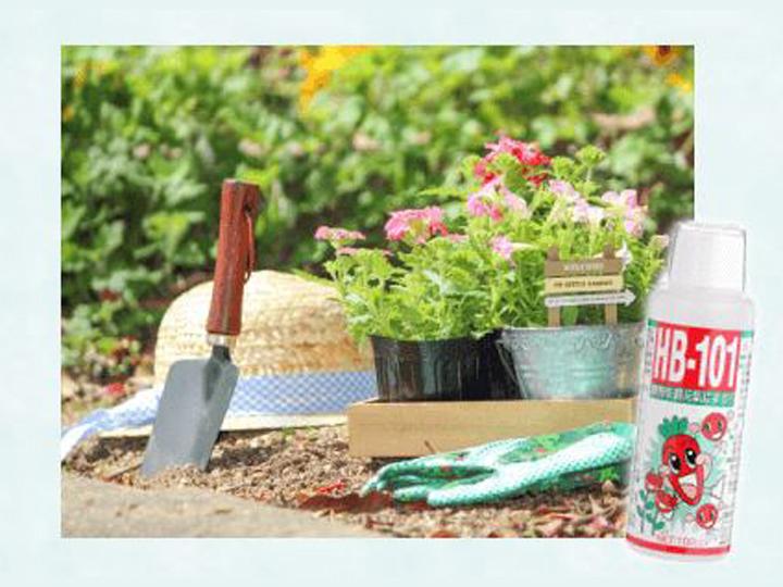 野菜や果物、花の悩みに…。天然植物活力液『HB-101』を試してみませんか?