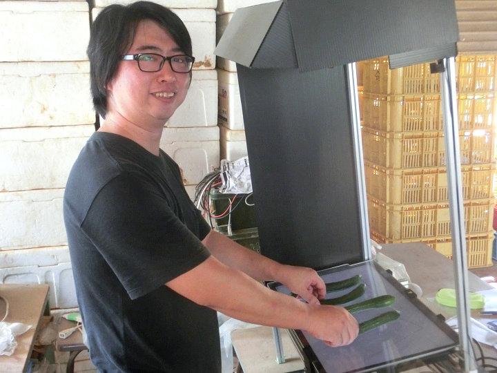 キュウリ生産者が開発、人工知能(AI)を取り入れた自動選別装置