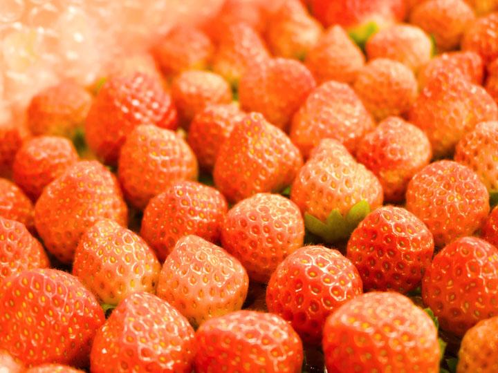 """【福島県大熊町】 """"誰でも働ける農業""""を実現するイチゴ植物工場で町に産業を! 最新鋭の設備で目指す日本一安全なイチゴづくり"""