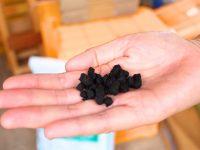 トウモロコシの炭からできた土壌改良剤『コーンコブミラクル』が農業を変える! 導入者に聞く、費用対効果と秀品率