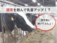 お茶どころ静岡では牛も緑茶を飲む! その効果とは