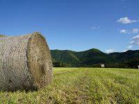 【北海道紋別市】女性も生き生きと活躍する職場。仔牛を専門に育てる『しらかば牧場』