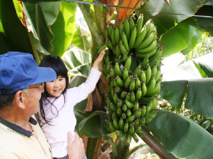 稲沢バナナ園