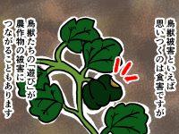 漫画「跡取りまごの百姓日記」【第26話】鳥獣被害