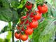 「農家が教える栽培方法」シリーズを全部読む