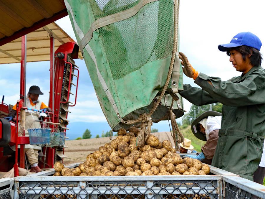 取材当日はちょうど収穫作業中。酒本さんが所属するJAびえいでは、日本で2台しかない大型収穫機『バリトロン』を最近導入しました