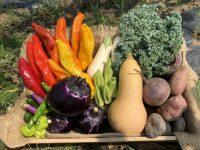 「野菜を全部買って農家を守れ!」リスクを取って発展する地域農業のカタチ