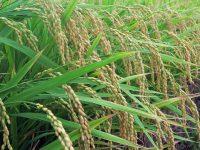 今秋成立の見込み 肥料取締法改正で何がどう変わる?