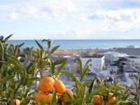 【福島県広野町】農業は一生の勉強。生産者と行政がタッグを組み、 学びの楽しさを次世代へ