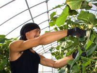 担い手を育て、求められる品質・収量を確実に消費者に届けることが使命。会津農匠が次世代へとつなぐ「農業」というバトン