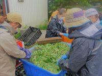 経営者も従業員も年間最大120万円受給可 農の雇用事業助成金とは?