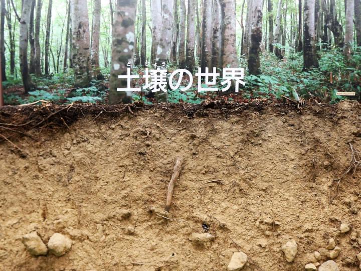 あなたの畑の土壌の性質は? 全国デジタル土壌図で調べよう!
