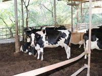地域の農家に愛される牛ふん堆肥 牛に優しく臭わないコンポストバーンで作る