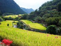 """全国に誇る""""熊本の農業""""を支える優良企業が人材を募集。未来の熊本農業を作ろう!"""