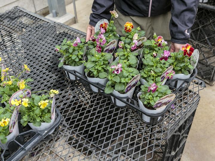 栽培棚には軽くて錆びないイワタニの『安心ベンチ』がおすすめ! 作業効率UPとケガの防止にも効果あり