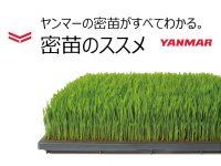 水稲の省力化・低コスト化を実現する『密苗』のススメ ― ヤンマーアグリ株式会社 ―