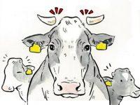 酪農漫画「うしだらけの日々」 第4話 鼻環と除角