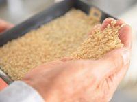 【福島県県中エリア】土地の恵みと、生産農家の思いが育む郡山市産高級米。就農・研修の体制も充実