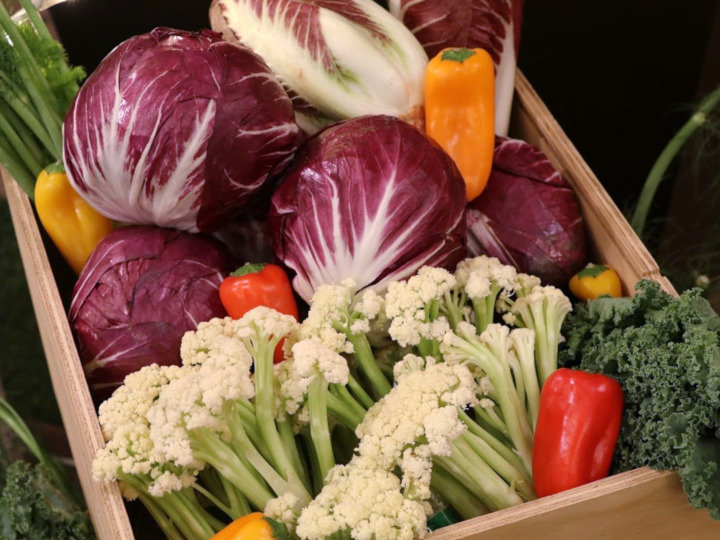 「日本生まれのイタリア野菜」で市場を創る 種苗ビジネスの今