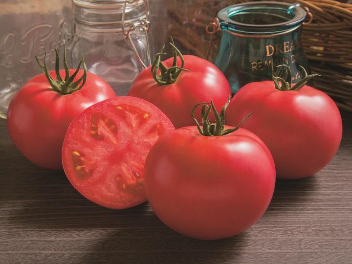 ブリーダーが教えるトマトの育て方 売り上げアップのための栽培方法とは?