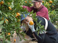 農業バイトの始め方 仕事内容、面接、給与を一挙解説!
