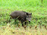 野生動物から人にうつる主な感染症は? 症状と予防方法を解説