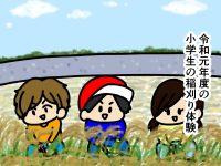 漫画「跡取りまごの百姓日記」【第32話】小学生の稲刈り体験