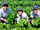 農業経営のヒント