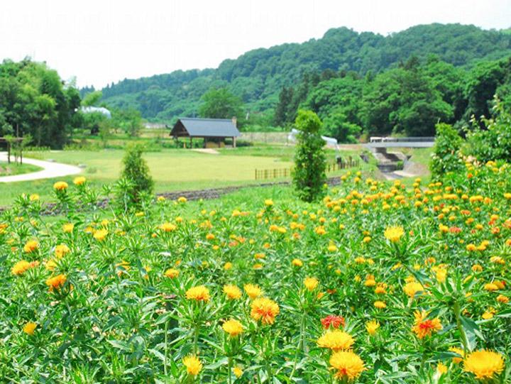 """雛とべに花の里「山形県河北町」で見つけた、""""自分らしい生き方""""。町に魅せられた地域おこし協力隊の物語"""