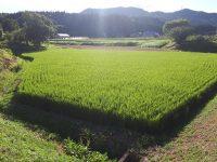 農業経営における節税【実践編②】 将来の自分のためにもなる節税とは