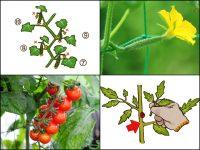 家庭菜園にもおすすめ 農家が教える春夏野菜の栽培方法・食べ方まとめ【キュウリ・ナス・ミニトマト】