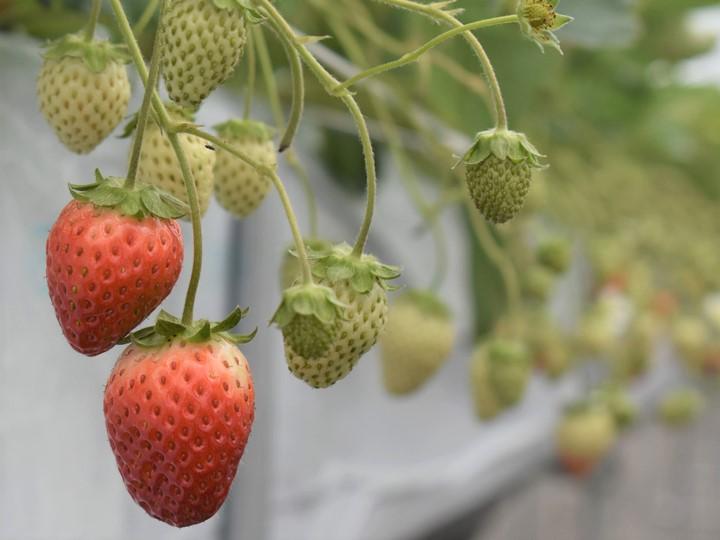 「地中熱」でコスト削減&収益アップ! ハウス栽培に革命を起こす、地中熱ヒートポンプがスゴイ