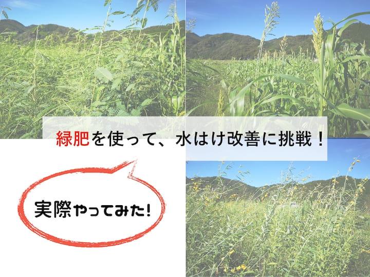 緑肥を使って水はけを改良するには?【実際やってみた!】