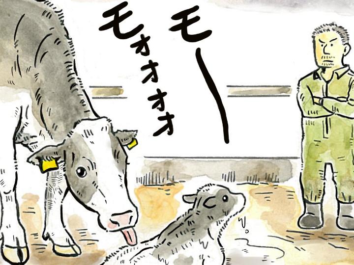 酪農漫画「うしだらけの日々」 第5話 肥育か酪農か
