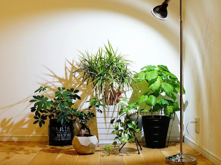 室内栽培の強い味方! 育成ライトはどう選ぶ?【脱枯れ専のベランダ畑】