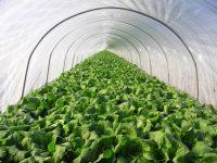 家庭菜園に最適! 1月に植える野菜5選【畑は小さな大自然vol.64】