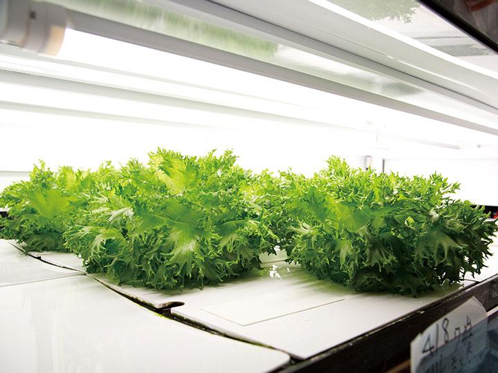 導入ユーザーも大絶賛!高機能レタスが33日で育つコンパクトなコンテナ型植物工場【株式会社木内計測】