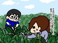 漫画「跡取りまごの百姓日記」【第38話】ブロッコリーの収穫