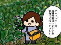 漫画「跡取りまごの百姓日記」【第40話】コンテナを使った収穫作業