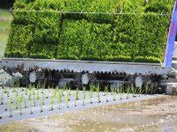 紙マルチ田植機で付加価値の高い米作りを! 有機米作りの大幅な省力化を実現
