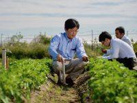 土の微生物量を見える化! SOFIX技術とは【畑は小さな大自然・番外編】