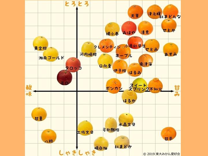 ミカン33品種を徹底解説! 味の違いやおいしい食べ方を知ろう