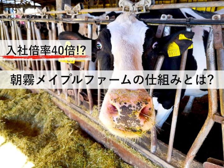 酪農もワンチームで労務改善。入社倍率40倍超を実現した挑戦とは