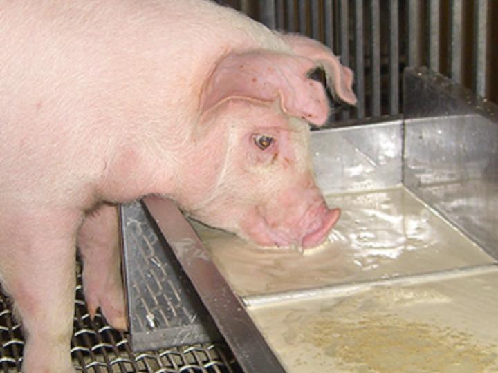 食品ロスを再利用 コスト約3割減の液体飼料を生産する日本フードエコロジーセンターの挑戦