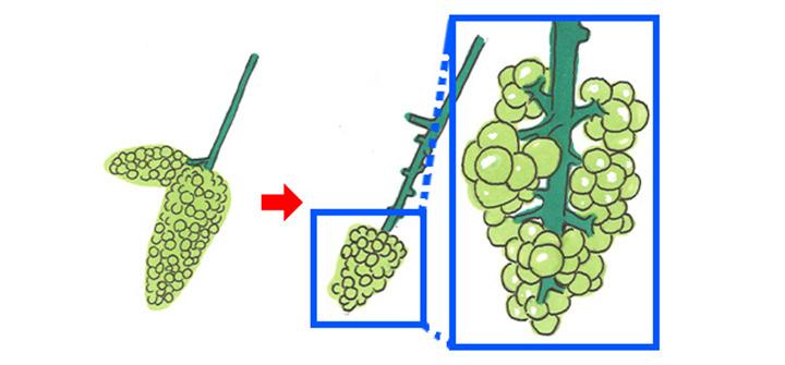 ブドウ栽培暦