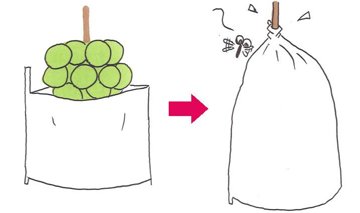 ブドウ剪定