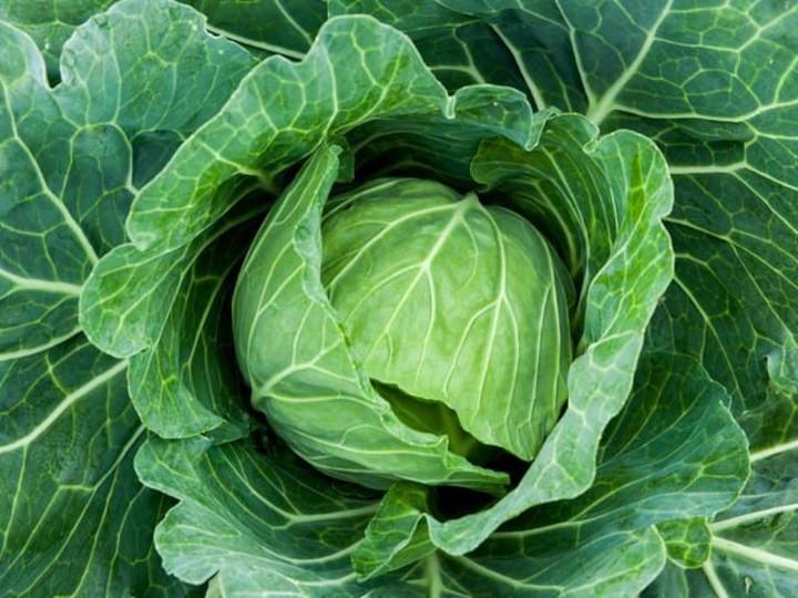 冬野菜販売の工夫とは? 地味だけどおいしいからきちんと伝えたい!【直売所プロフェッショナル#15】