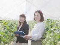 産地の栽培技術伝承を効率化 ICT活用の農業技術伝承サービス「AGRIs for Team」をJA蒲郡市が初導入