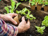 家庭菜園初心者に最適! 2月に植える野菜5選【畑は小さな大自然vol.67】