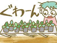 漫画「宮崎に移住した農家の嫁日記」【第100話】手抜き工事により苗床崩壊